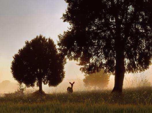 gd_bosques